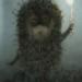 Аватар пользователя Lilya