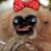 Аватар пользователя a.izmailova