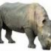 Аватар пользователя Rhino
